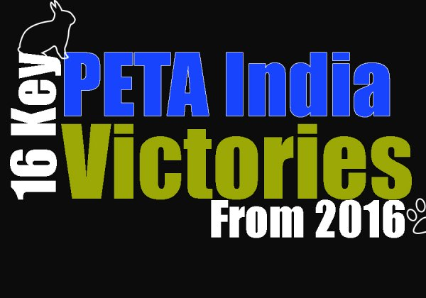 PETA India Wins Big for Animals in 2016