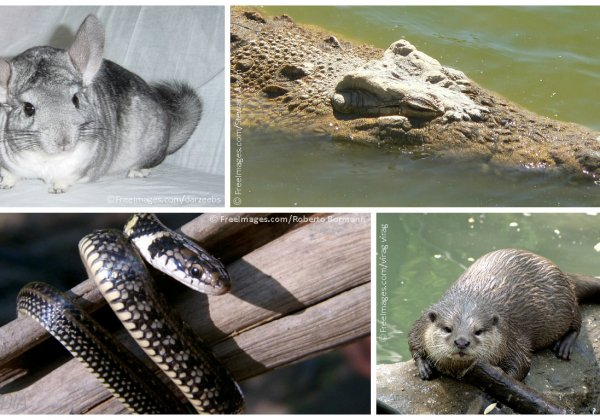 VICTORY: India Prohibits Importation of Reptile Animal Skins, Certain Furs