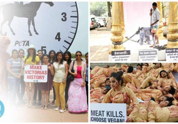 The 12 Best PETA India Demonstrations of 2016
