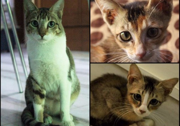Three adorable kittens are STILL looking for loving homes!