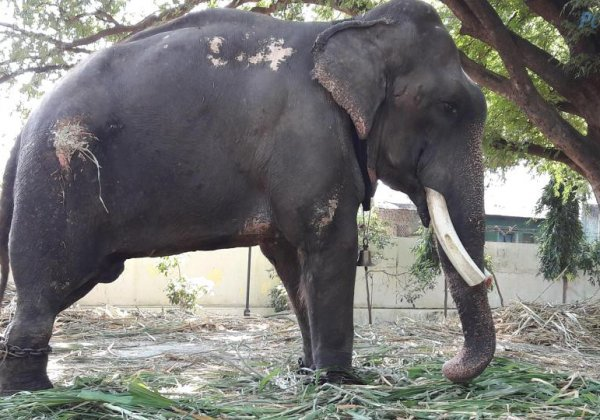 Urge Forest Minister to Free Dying Elephant