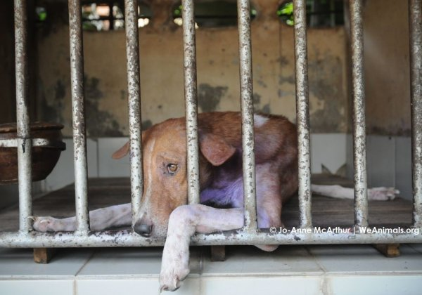 Following PETA Complaint, Police Arrests Shelter Dog Acid Attackers