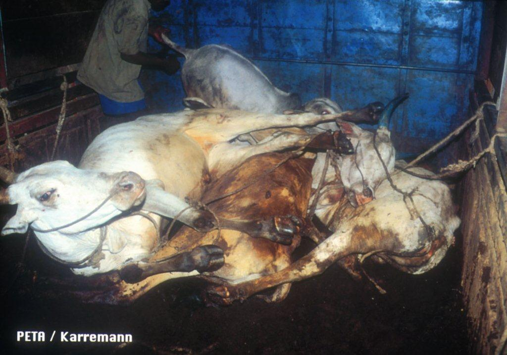 Ask All States to Close Illegal Slaughterhouses