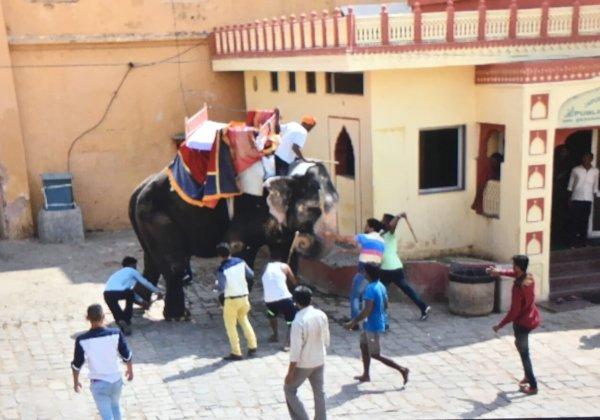 Help End Cruel Elephant Rides in Jaipur