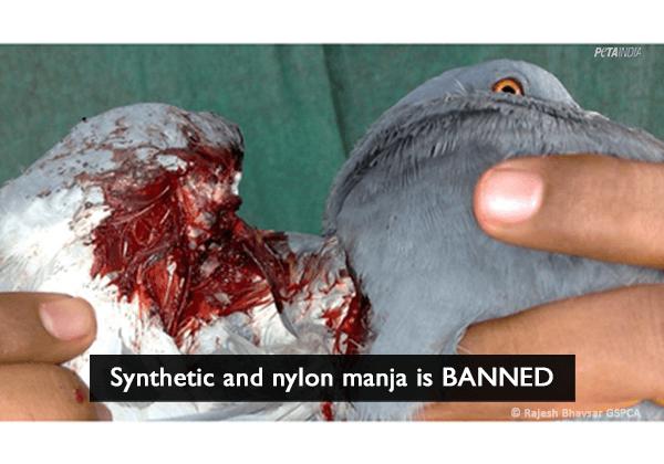 Synthetic/Nylon Manja Banned After PETA Push