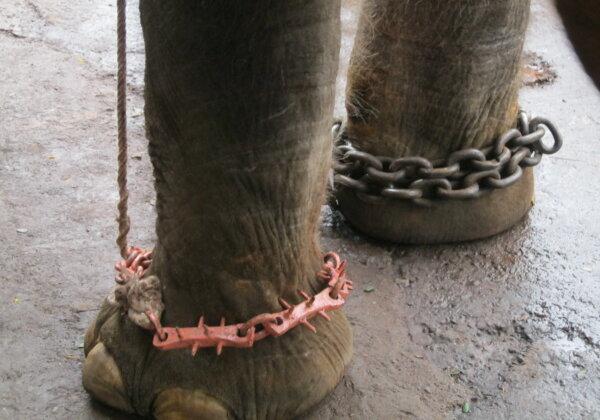 Help Spare Elephants From Cruel Performances