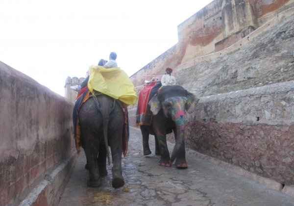 Inspection Report: Blind And TB-Infected Elephants Forced To Haul Crushing Loads At Amer Fort