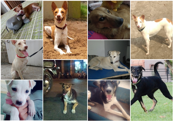 Help Decide Who Will Win PETA India's 2018 Cutest Indian Dog Alive!
