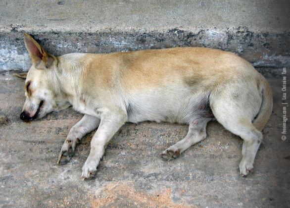 PETA Calls for Police Action Against Mumbai Man Thought to Batter Dog to Death