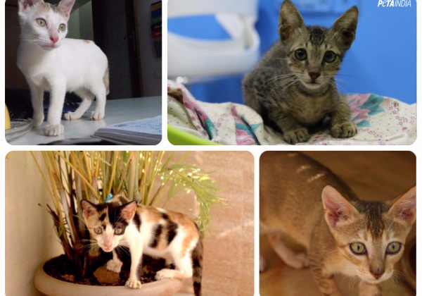 Four Rescued Kittens Are In Need Of Urgent Homes!