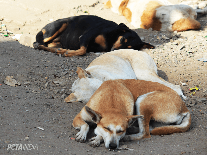 PETA India Saves Hundreds Of Dogs From Illegal Relocation