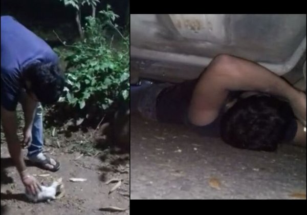 Mother Cat Saves Her Kitten With PETA's Help