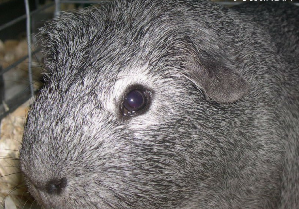 Following Pressure by PETA India, Guinea Pigs, Mice, and Other Animals Are Spared Ordeal of Cruel Pesticide Tests