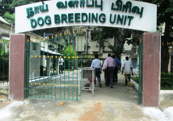 Evidence: Imprisoned Dogs Suffer at Tamil Nadu Dog-Breeding Unit