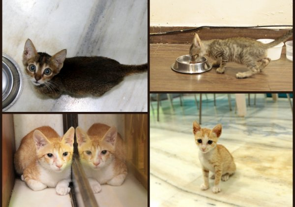 Four Adorable Kittens Are Looking for Loving Homes!