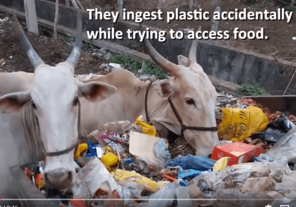Go Plastic-Free for Animals This World Environment Day