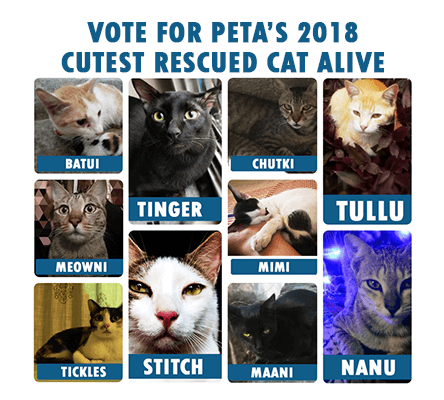 Who is PETA's 2018 Cutest Rescued Cat Alive?