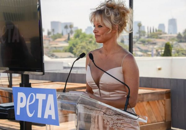 Pamela Anderson Thanks the World Health Organisation: 'Breast Is Best'