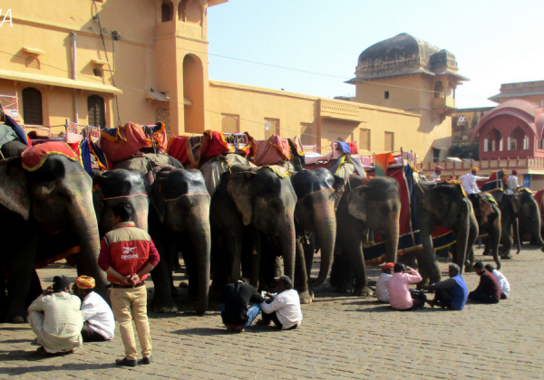 Rajasthan High Court Issues Notice to State Concerning Illegal Elephant Rides