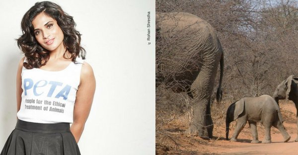 Richa Chadha Teams Up With PETA India To Stop Deadly Collisions Between Elephants and Trains