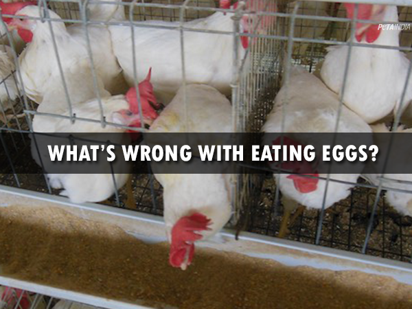 Investigation Proves That It's Wrong to Eat Eggs
