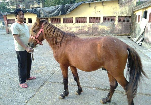 PETA India Awarded Custody of 17 Horses Used for Illegal Rides
