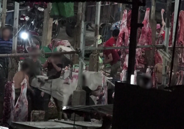 Breaking: Workers Caught Bludgeoning Cows With Sledgehammers for Meat and Leather