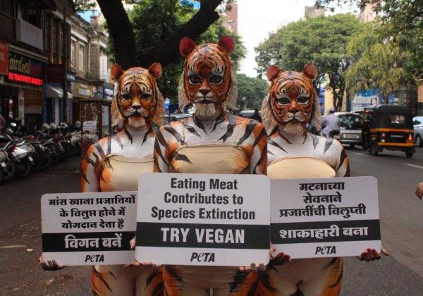 Want to Save Tigers? Here's Why You Should Go Vegan!