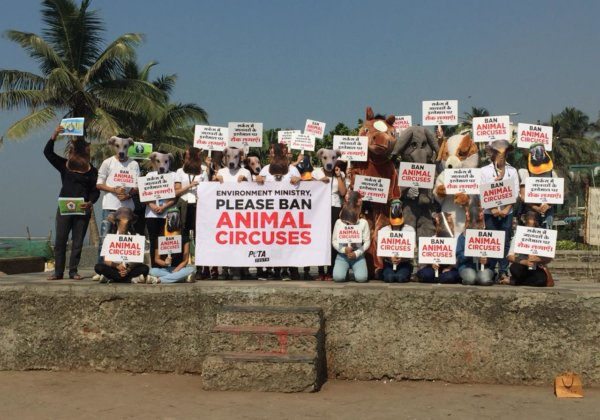 After PETA India's Plea, Delhi High Court Directs Animal Welfare Board to Disclose Status of Animals in Closed Circuses