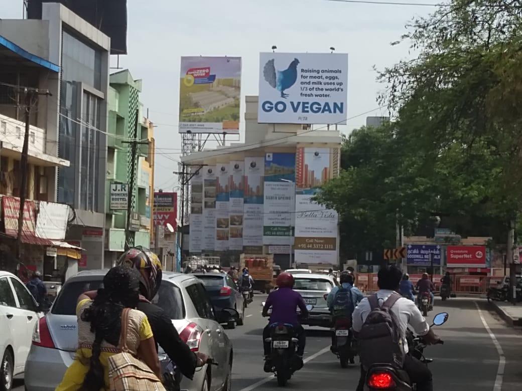 PETA India Chennai Hoarding Water Crisis