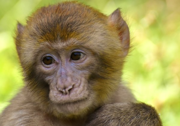 monkey photo for issues - animals not ours to use for experiments