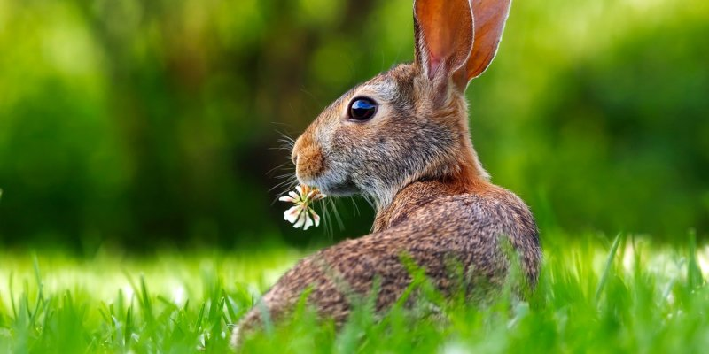 Animals in Cosmetics and Household-Product Testing