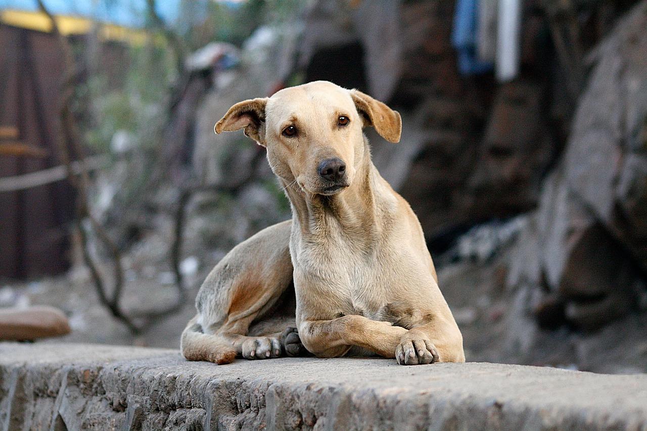 Photo of a street dog - Dog Abused in Worli, Mumbai
