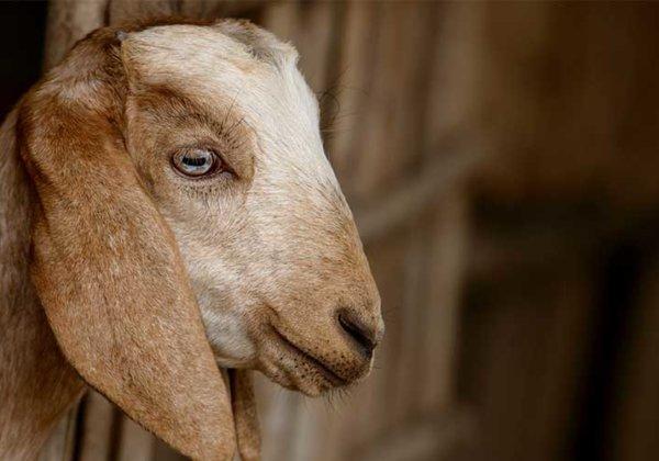 PETA India: India's Animal Rights Organisation | PETA India