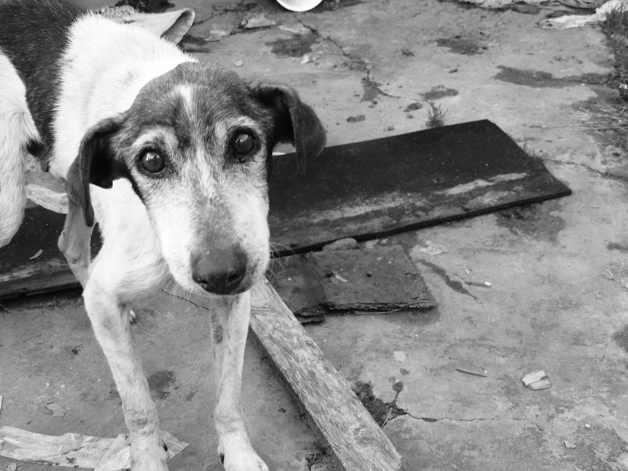 sad dog street india