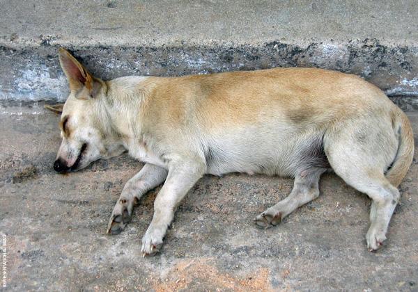 Apply for a Job With PETA India | Job Openings | About PETA - PETA India