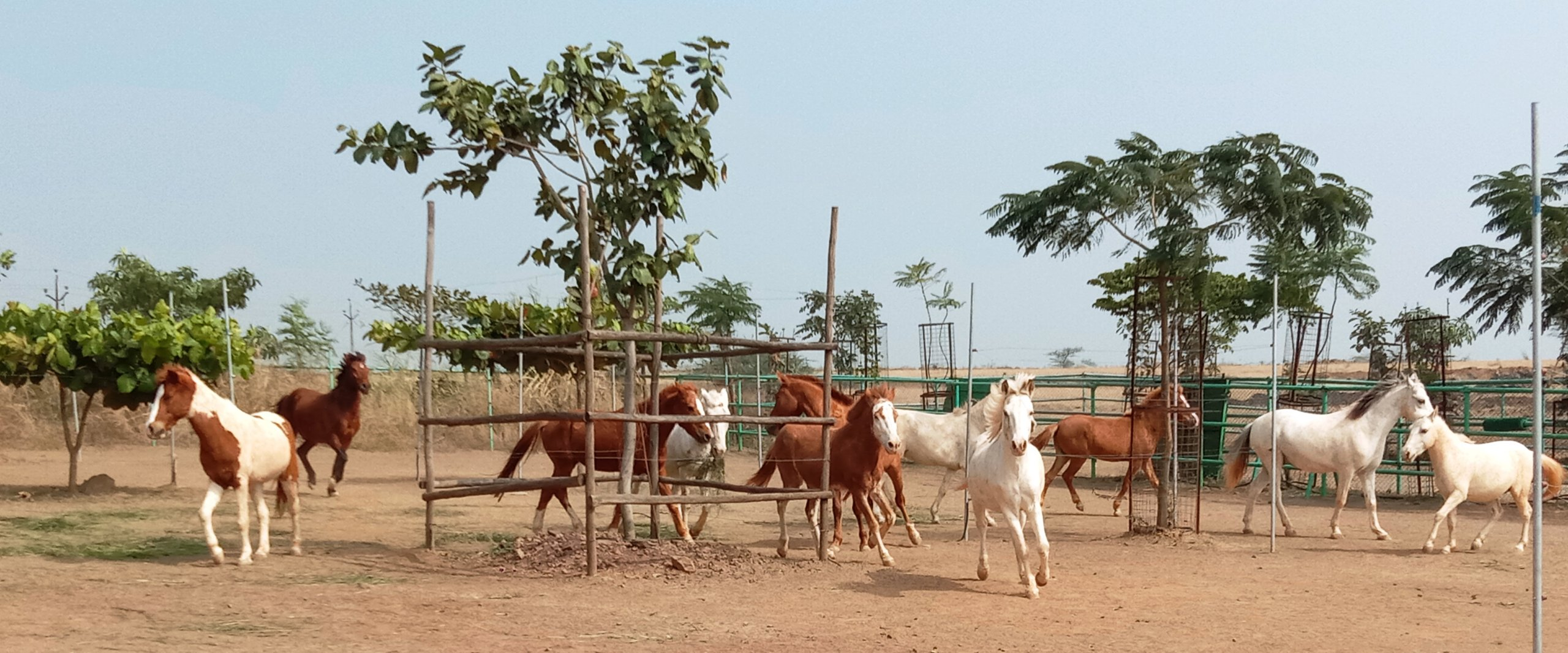 17 rescued horses from joyrides - Photo by Rahat