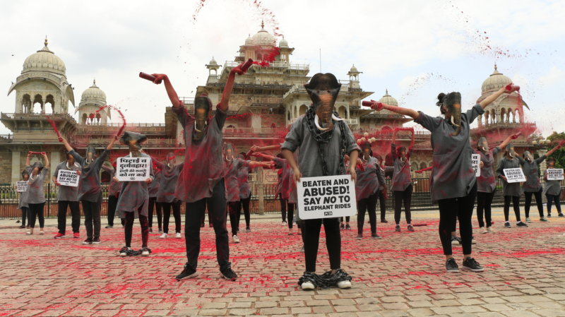 Dozens of 'Elephants' to Call for End to Rides
