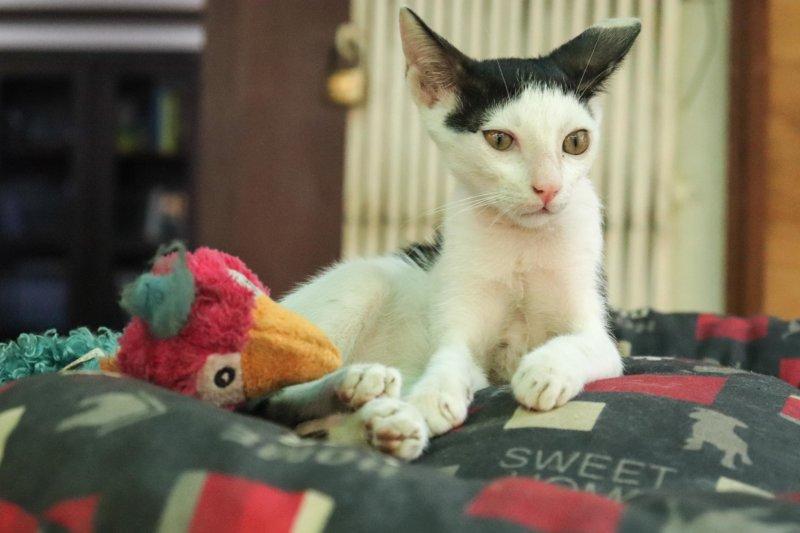 Muzamil Ibrahim's Kitten