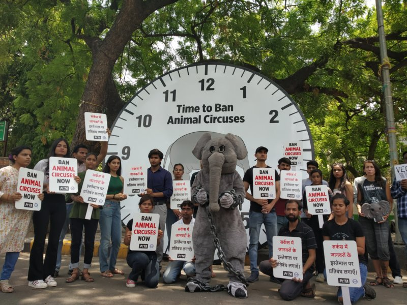 The Clock Is Ticking on Cruel Circuses