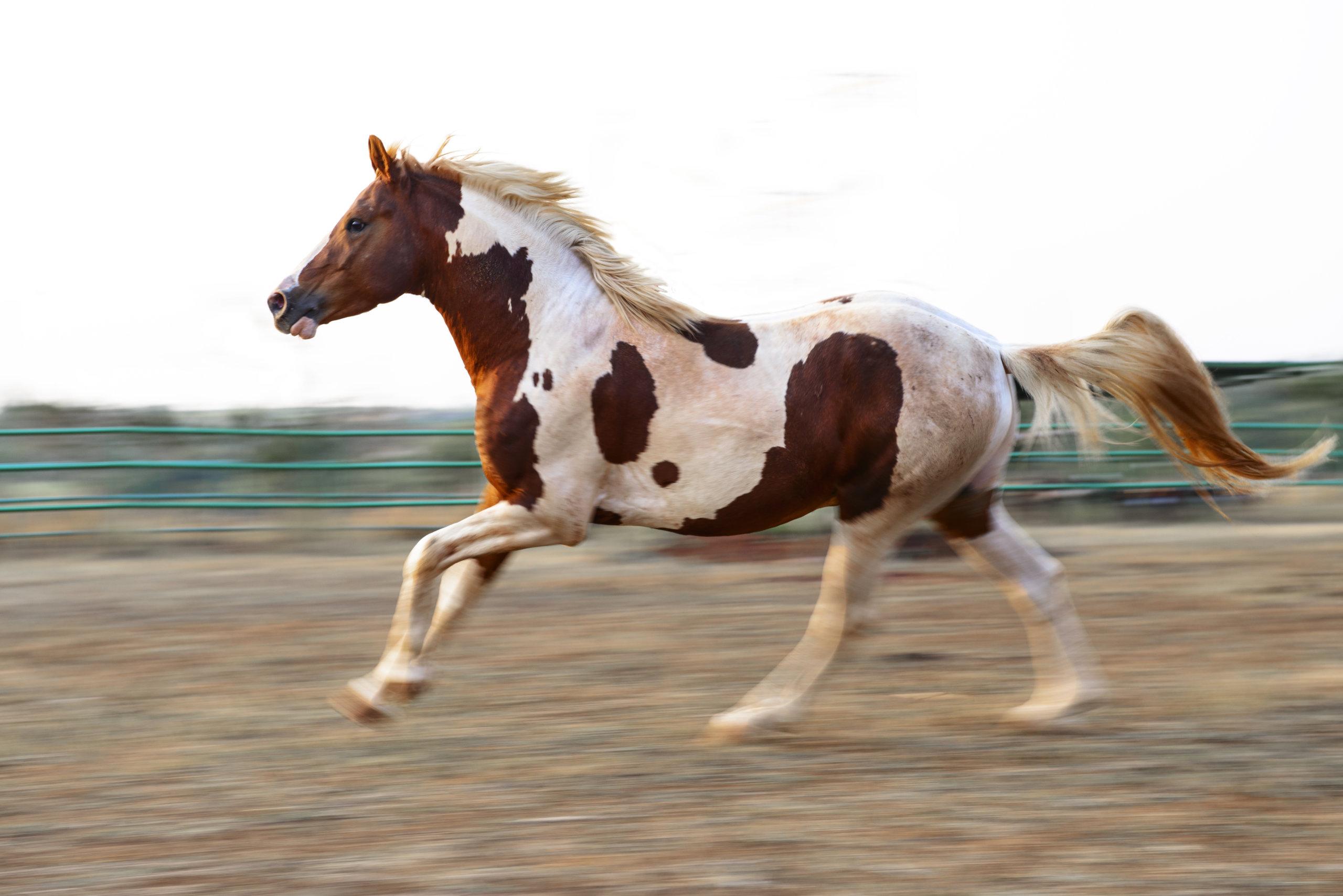 happy horse photo by Aneesh Sankarankutty used in diptheria progress blog