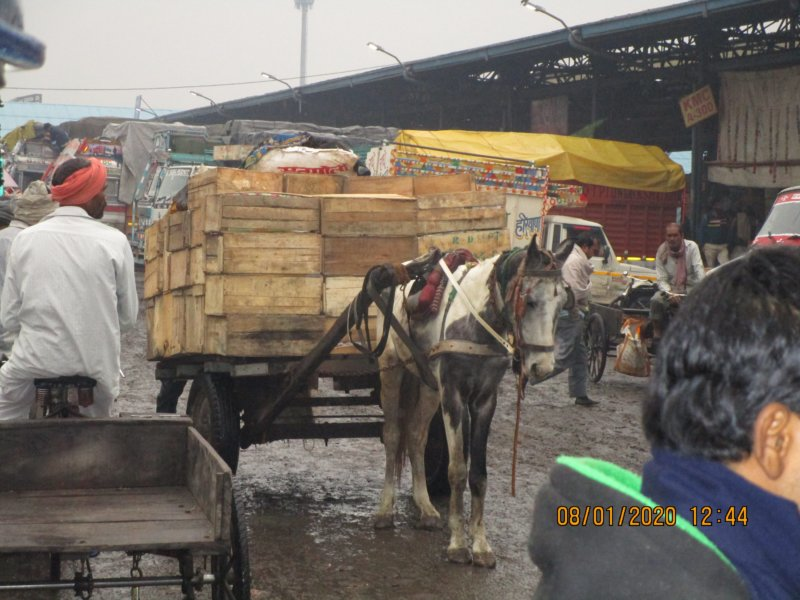 Horse Tongas in Delhi Photo