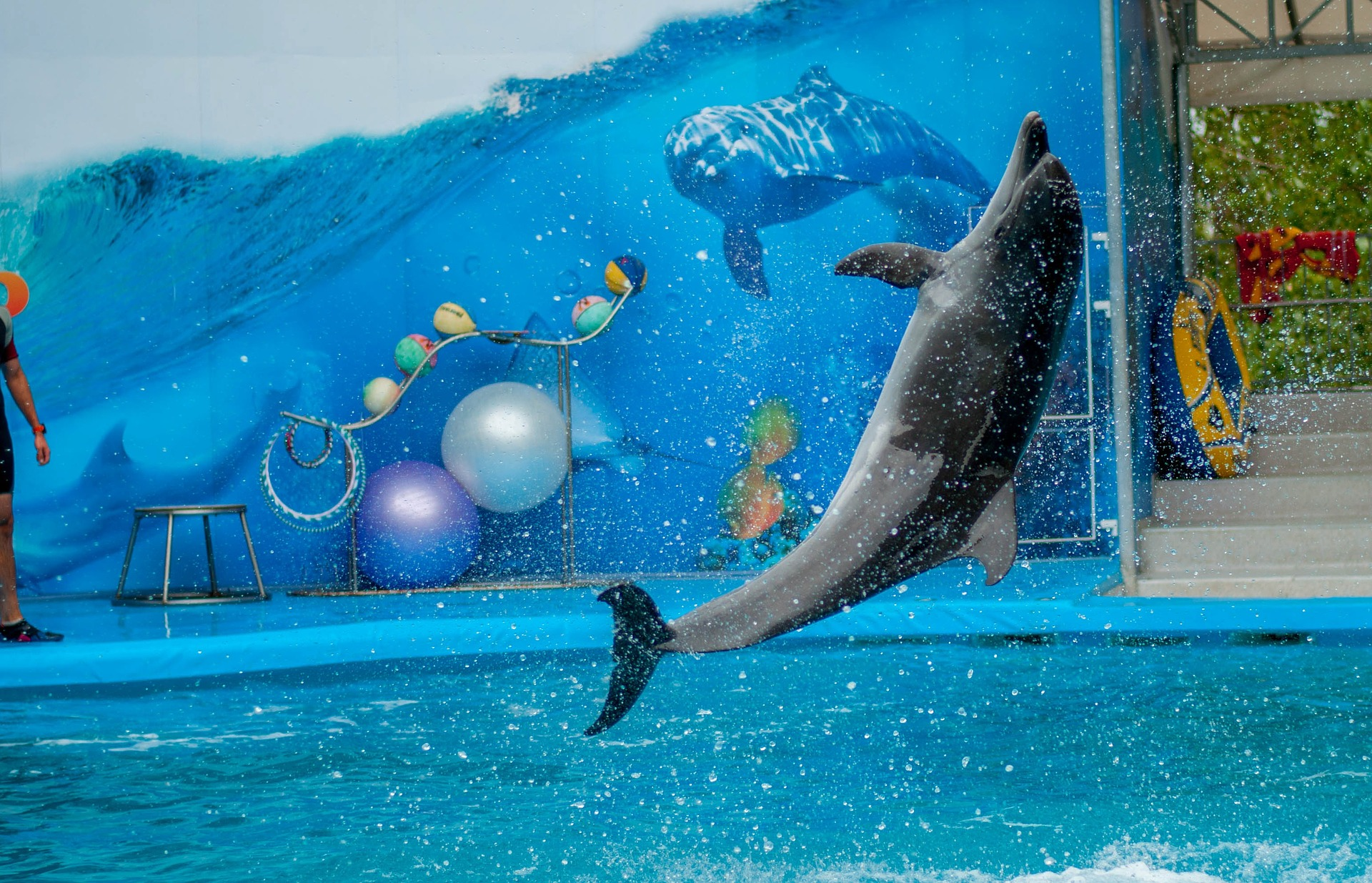 dolphin park photo by pixabay free site