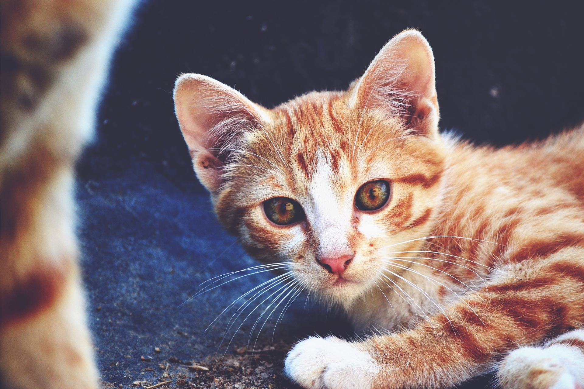 Cat photo from pixabay - for cat stuck in Chennai blog