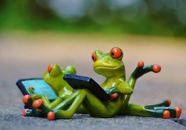 help animals online blog featured image