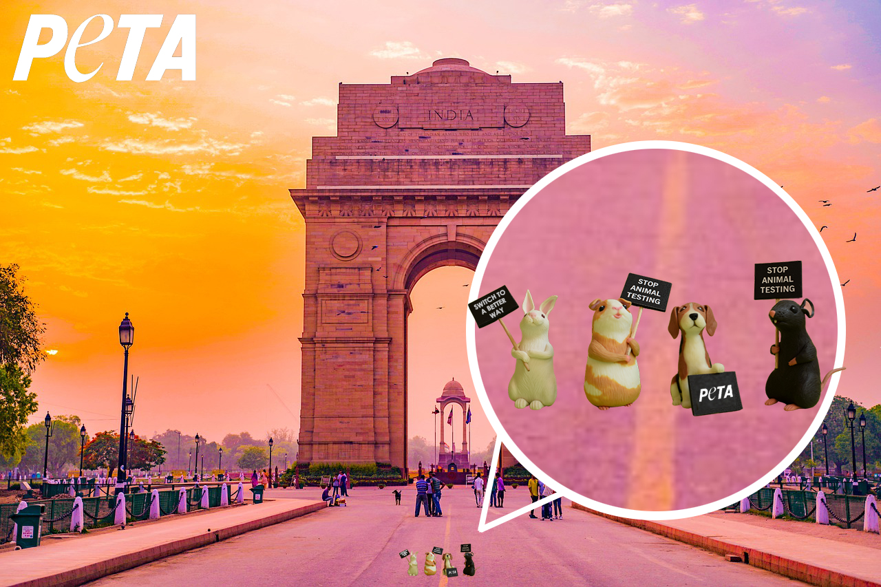 Miniature Protesters at India Gate