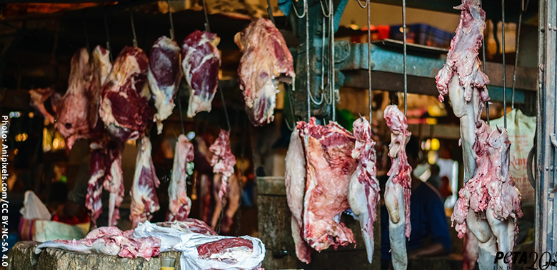 URGENT: Help Shut Down Live-Animal Markets That Breed Deadly Diseases