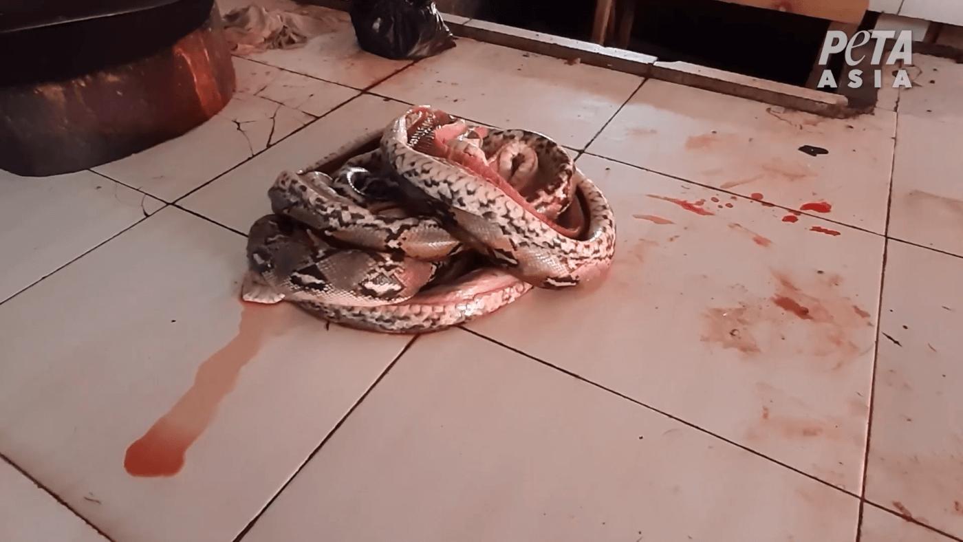 bleeding-mutilated-snake-wet-market