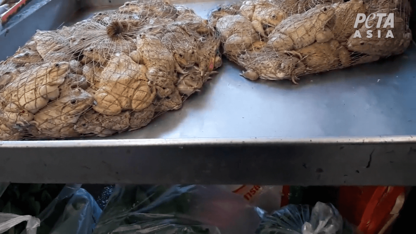 live-frogs-in-bags-wet-markets
