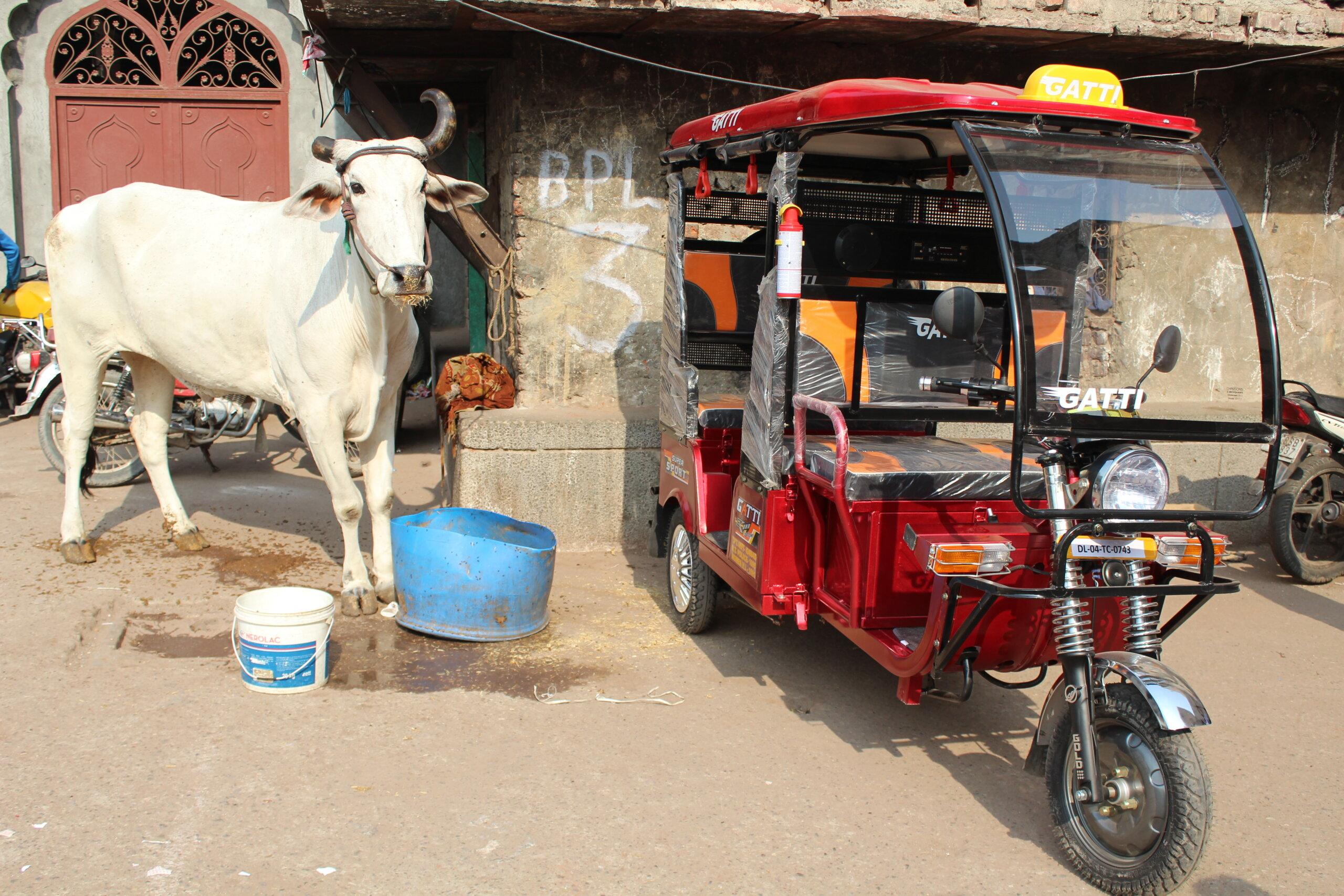 PETA India''s Delhi Mechanisation Project Ends Working Animal Suffering